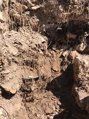 Excavations in the garden