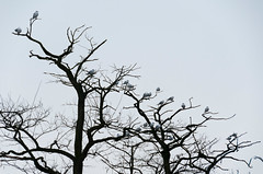 """120212 Clissold 3 (hoffman) Tags: clissoldpark hackney outdoors nature tree birds perching davidhoffman davidhoffmanphotolibrary socialissues reportage stockphotos""""stock photostock photography"""" stockphotographs""""documentarywwwhoffmanphotoscom copyright"""
