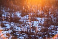 Erstes Licht (geraldtourniaire) Tags: eos6d ef ef1285lusm natur nature 6d licht l bokeh