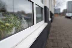 Hidden cat // Amsterdam Zuidoost (Merlijn Hoek) Tags: amsterdam street streetphotography cat cats kitten kat poes poesje venster water druppels zwartwitpoesje hidden vensterbank kleur zuidoost amsterdamzuidoost