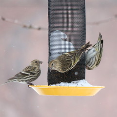 076. Busy feeder (Misty Garrick) Tags: arboretum universityofminnesotalandscapearboretum landscapearboretum flowershow bird birds birding