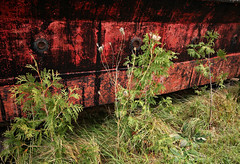 Red and Green Show (Doris Burfind) Tags: ship rust red autumn fall metal decay abandoned weathered