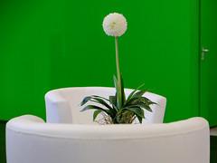 Messestand (Werner Schnell Images (2.stream)) Tags: ws didacta 2019 köln messe messestand pflanze grün