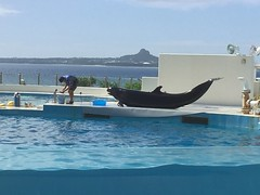 2016-09-24 14.46.25 (jccchou) Tags: okinawa 沖繩 琉球 japan churaumi aquarium 沖縄美ら海水族館 blue sky cloud whale dolphin