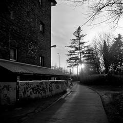 Evening Light (ucn) Tags: tessar75mmf35 rolleiflex35b mxevs mutar07x agfacopexrapid berlin filmdev:recipe=12019 adoxadoluxatm49 developer:brand=adox developer:name=adoxadoluxatm49
