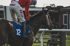 DSC_0794 (fullerton42) Tags: straftford racecourse stratfordracecourse horse horses racehorse horseracing race punter punters specatators sport equine england