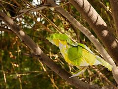 Little bird (Rohit KO) Tags: origami papercraft paper fold double tissue yellow green little bird rohit ko paperfolding art nature photograpy satoshi kamiya