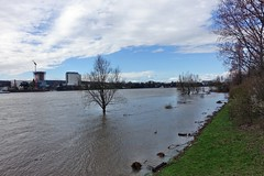 der Rhein hat wieder Wasser (mama knipst!) Tags: bonnbeuel rhein deutschland germany allemagne märz hochwasser