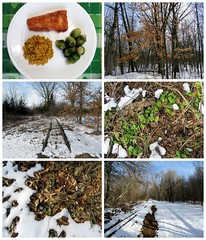 Walking the Trails By the Fairgrounds (genesee_metcalfs) Tags: collage march winter food dinner fish brusselssprouts couscous nature walk railroadtracks snow trees leaves