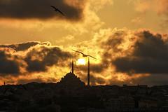 Gün batımı ve martı (kadrajdakihikayeler) Tags: istanbul şehir martı segull city bulut cloud tersışık turkey türkiye photography kadrajdakihikayeler kadrajdaki hikayeler