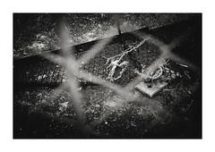 フェンスのあちら側 (gol-G) Tags: fujifilm xpro2 fujifilmxpro2 nokton 35mm f12 voigtlandernokton35mmf12aspherical digital bw japan kobe
