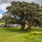 Otamure Bay DOC Camp, Whananaki, Northland thumbnail