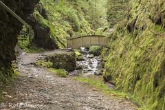Pucks Glen (rjonsen) Tags: river gorge scotland alba december green valley bridge path tripod
