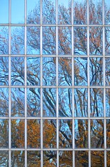 Treescape (pjpink) Tags: abstract abstraction colorful centralpark nyc newyork newyorkcity ny november 2018 fall pjpink 2catswithcameras