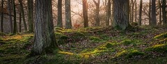 Manesty Park Woodland (Nicks-2017) Tags: keswick england unitedkingdom gb lakedistrict cumbria nationalpark thelakes trees woodland forest outdoors nature landscape sunlight tranquil scenery derwent canon eos 6dmkii mossy grass leaves leaf