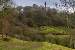 Peak Hill-1-15 (Sheptonian) Tags: somerset rural scenic landscape trees fauna grassland