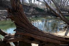 fallen tree at the creek (pvh photo) Tags: tree creek glare stream