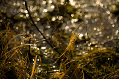 Sparkling conversation (tonguedevil) Tags: outdoor outside countryside winter nature pond water grass plants light shadow sunlight sparkle