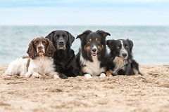 Friends (Flemming Andersen) Tags: all buddy frisbee yatzy zigzag water beach dog