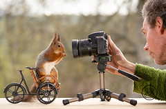 Red squirrel standing on bicycle and man behind a camera (Geert Weggen) Tags: squirrel camera red animal backgrounds bright cheerful close color concepts conservation culinary cute damage day earth environment environmental equipment love valentine flower photo bouquet model person human man bike cycle bicycle geert weggen hardeko bispgården ragunda sweden jämtland