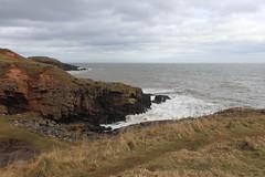 Cliffs,Collieston_Mar 19_456 (Alan Longmuir.) Tags: grampian aberdeenshire collieston cliffs