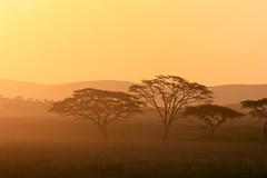 Serengeti National Park (Ralph Apeldoorn) Tags: nationalpark serengeti serengetinationalpark sunset mara tanzania tz