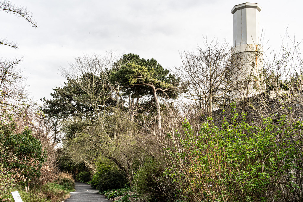 THE BOTANIC GARDENS IN GLASNEVIN DUBLIN [ TODAY I USED A VOIGTLANDER 40mm F1.2 LENS]-150689