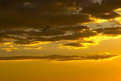 5506 (fpizarro) Tags: bambuí centrooeste minasgerais mg pds pordosol pássaro pássaros coruja corujaburaqueira canáriodaterraverdadeiro sol céu azul aoarlivre animal gato cão cachorro fpizarro