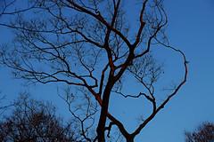 SDQ_1124 (koyaman3422) Tags: 京都 kyoto sigma sdquattro 1770mm 下鴨神社