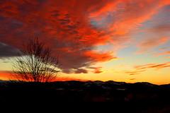 Bloody heaven (tatranka7) Tags: sunset silhouette sky clouds colors tree evening winter