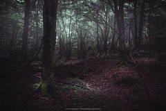 In the forest (GeologistAngler) Tags: boscovecchio campo geologia maggio vajont escursione woods woodlands landcapes landscapephotography nature darkmood naturephotography fotografianaturalistica fotografiapaesaggistica foresta bosco