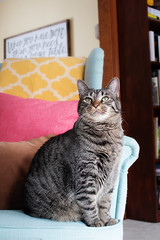 01.20.2019 (TheWeltyFamily) Tags: 2019 january theweltyfamily cat tabby ruben