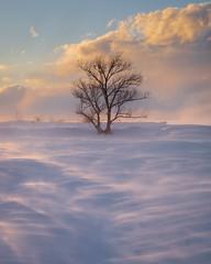 DSCF6807.jpg (mblonde12) Tags: britannia winter