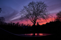 Reflection of evening sky (kra_natalie) Tags: tree sunset sky rose pink blue violet lilac silhouette evening night mirror reflection calm nature landscape