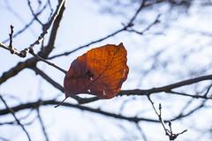 Alone ... (Julie Greg) Tags: tree leaf colours park details canon sky macro