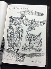 Great horned owl (schunky_monkey) Tags: fountainpen penandink ink pen illustration art drawing draw jounral nature sketchbook sketching sketch claws beak feathers flying flyer bird owl greathornedowl