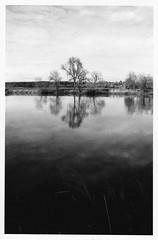 Analogue B&W Project (christian.grelard) Tags: argentique analogue canonae1 film ilford 50mm bw blackandwhite noiretblanc monochrome ciel eau arbre river