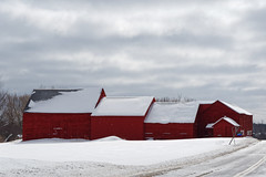 Barn Assembly (fotofish64) Tags: barn redbarn building architecture snowcoveredroof roof grouping rural snowfall snow winter winterlandscape rotterdam princetown schenectadycounty newyork capitaldistrict farm agriculture overcast cloud road pavement outdoor pentax pentaxart kmount k70 hdpentaxda1685mmlens rynexcorners
