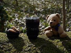 Kaffeepause im Wald (ingrid eulenfan) Tags: 2019 kaffeepause pausecafé coffebreak 365project kaffee espresso cappuccino cup coffeepot tasse coffee coffeetogo teddy talisman kekse natur nature objektiv becher