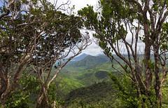 Black River Gorges National Park / Национальный парк Ущелье Черное реки (dmilokt) Tags: природа nature пейзаж landscape река river водопад waterfall dmilokt