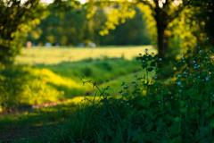 20180505-Canon EOS 6D-8582 (Bartek Rozanski) Tags: briscol luxembourg belgium ardennes belgie belgique ardennen spring hiking path trail bokeh erezee