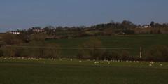 brill walk-190401-62.jpg (Phil Mercer-Kelly) Tags: sunshine spring radiooxford bbc counyryside blossom philmercer getactive brill sheep buckinghamshire europe england uk oxfordshire views bucks health windmill walker oakley walk