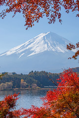 Kawaguchiko Lake in Autumn (Japan) - snow-capped Mt Fuji with the frame of red maple leaves and blue sky. (baddoguy) Tags: asia at the edge of autumn leaf color awe backgrounds beauty in nature blue image copy space famous place frame fujikawaguchiko idyllic international landmark japan lake kawaguchi local majestic maple tree mountain peak mt fuji national natural condition nonurban scene outdoor pursuit photography red sky snow snowcapped tourism tranquil travel destinations vertical volcano wallpaper decor yamanashi prefecture