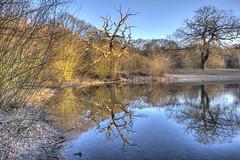 The Wise Oak (ArtGordon1) Tags: eppingforest london england uk leytonstone winter frozen reflections reflection hollowpond hollowponds davegordon davidgordon daveartgordon davidagordon daveagordon artgordon1 february 2019