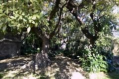 BOSC (MIRAMAR) (Yeagov_Cat) Tags: 2019 barcelona catalunya bosc miramar montjuïc