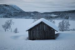 Old cabin (dinni69) Tags: cabin hytte naust vinter winter norway nordnorge harstad snø snow sky trees vinterlandskap