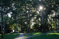 Beautiful Boronia Park (zassle) Tags: eucalyptus flora landscape park scenery tree trees camera:make=fujifilm geocountry exif:aperture=ƒ40 geostate geocity camera:model=xpro2 geolocation exif:model=xpro2 exif:make=fujifilm exif:focallength=35mm exif:isospeed=400 exif:lens=xf35mmf14r
