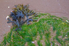 Washed Up (TERRY KEARNEY) Tags: macroalgae seaweed coastline coast sand sea watercourse waterfront waterway seashells grass northwales wirral wirralpeninsular wirralcountrypark canoneos1dmarkiv canon daylight day explore europe england kearney landscape nature oneterry outdoor terrykearney rural weather wildlife 2019 washedup rock