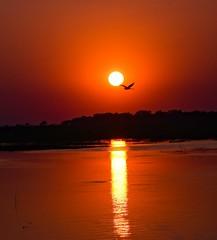 Okavango Delta Sunset (Stephen Viszlai) Tags: okavangodelta botswana sunset sundowners pelican africa river safari adventure travel tourism tourist