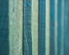 Blue fence (Andy Jah) Tags: wood blue fence closeup lines micro nikkor 40mm macro colour selectivefocus